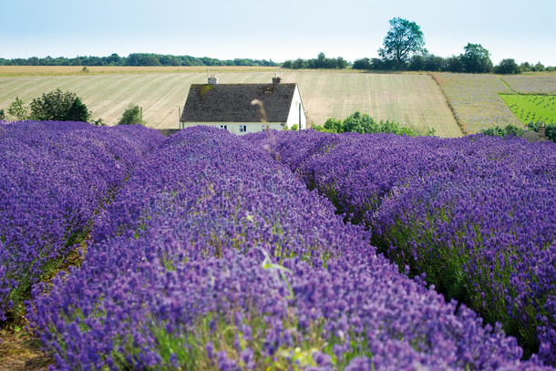 How_to_take_sharp_photos_NIK11.zone_1.lavender05b