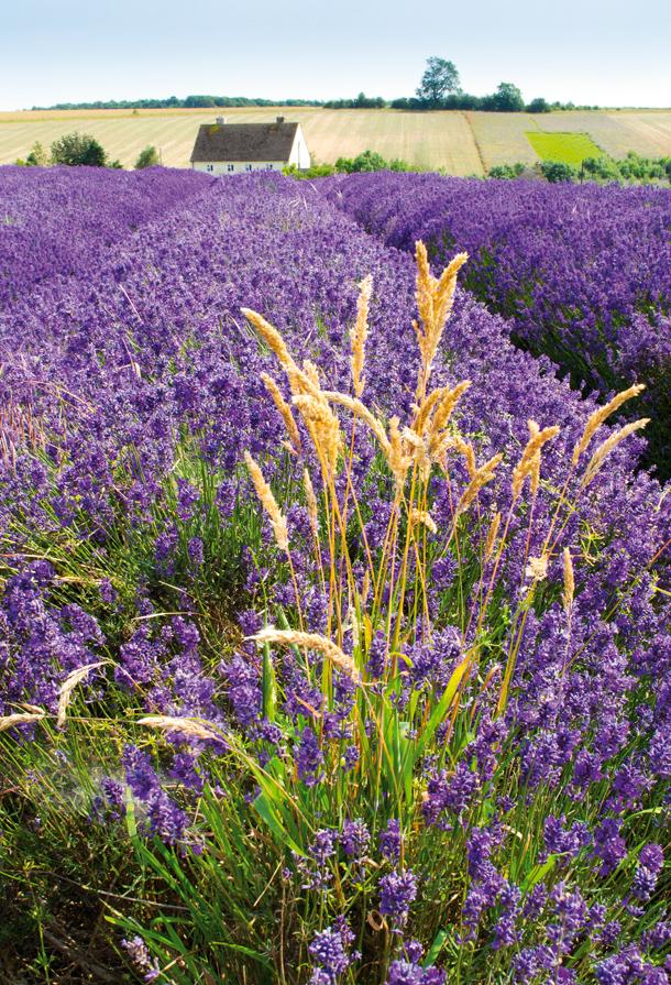 How_to_take_sharp_photos_NIK11.zone_1.lavender_main01