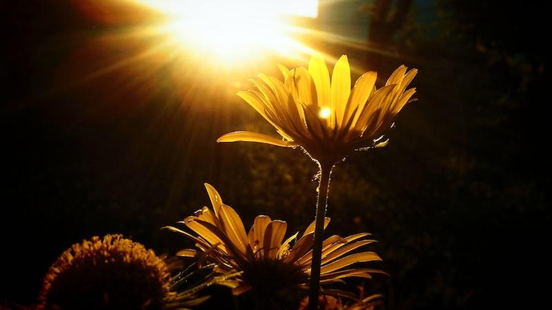 Những lời khuyên khi chụp macro hoa, cỏ, cây cối trong vườn
