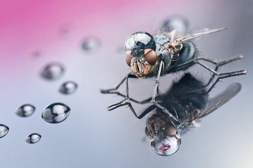 Côn trùng và giọt nước ấn tượng dưới góc ảnh macro