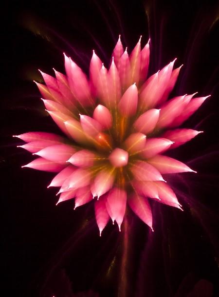 Firework-12-d6566