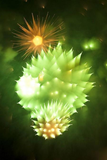 Firework-18-d6566
