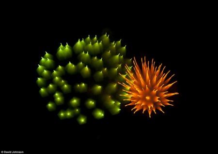 Firework-2-d6566