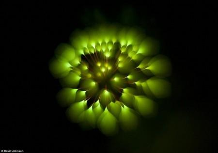 Firework-3-d6566