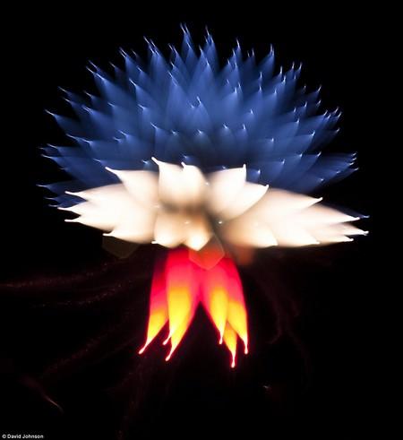Firework-8-d6566