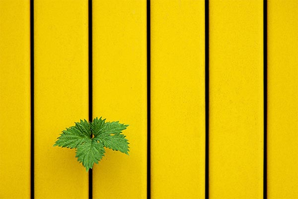 Low-Yellow-Green-by-Jul