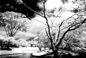 Nikon_Canon_Kinh loc cho may anh so_01