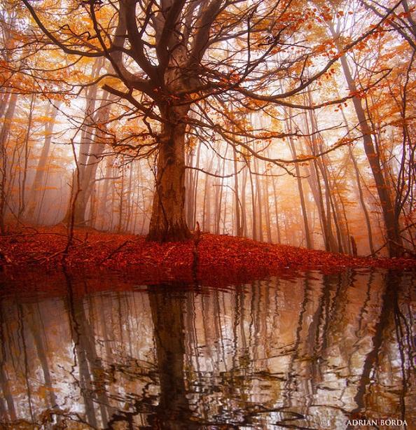 Tự nhiên qua bộ ảnh siêu thực của nhiếp ảnh gia