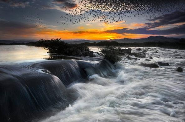 Dam-chim-trong-the-gioi-tu-nhien-sieu-thuc-dep-la-thuong-8