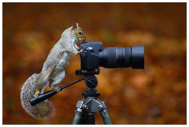 """Ngắm nhìn bộ ảnh hài hước """"Khi động vật làm thợ ảnh"""""""