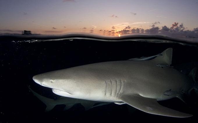 Ảnh sinh vật kỳ lạ thắng giải nhiếp ảnh dưới nước 2015
