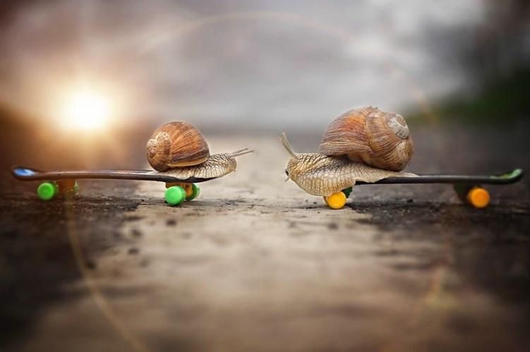 Giây phút lãng mạn của ốc sên trong ánh hoàng hôn.