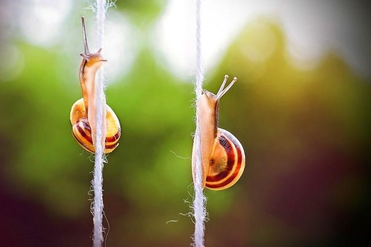Vẻ đẹp tinh khôi của hai chú ốc đang nỗ lực leo dây.