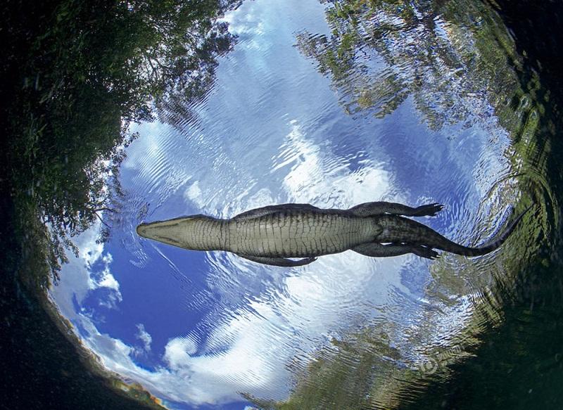 """Nhiếp ảnh gia nhảy xuống """"động cá sấu"""" để tác nghiệp"""