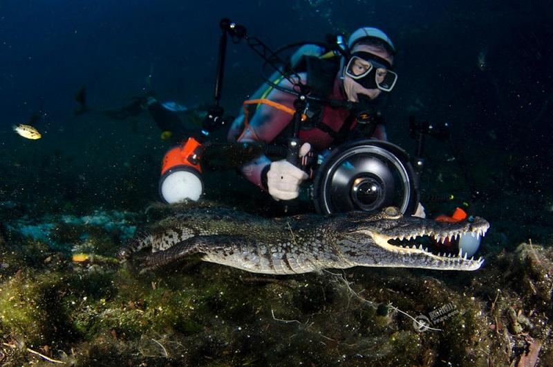 """Nhiếp ảnh gia xuống """"động cá sấu"""" để tác nghiệp"""