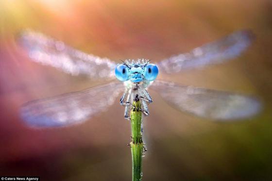 Những bức ảnh siêu độc chụp cận cảnh mắt côn trùng