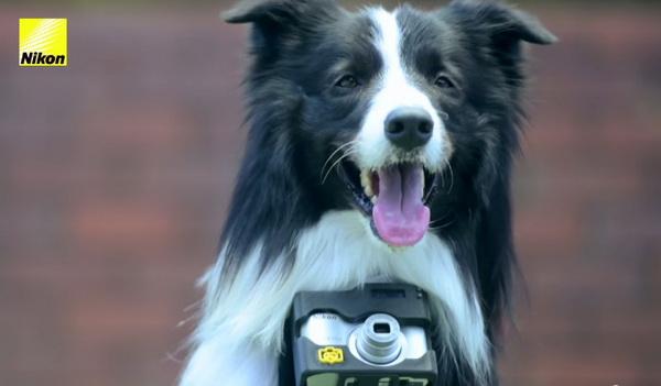 Nikon phát triển máy ảnh dành cho… chó