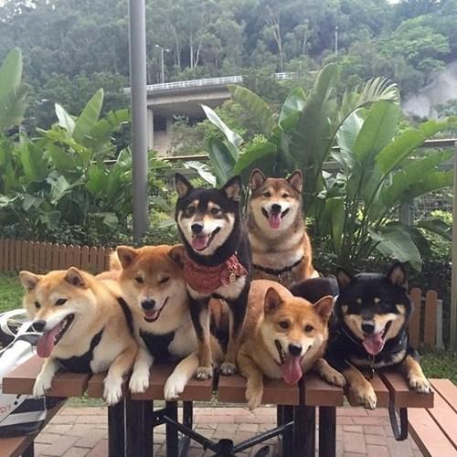 """Biểu cảm hài hước của những chú chó đáng yêu hớp hồn biết bao người. """"Cả làng cùng cười khi chụp ảnh là tương đối khó, nhưng không sao, chúng tôi có thể cân đối thiên hà này mà!"""""""