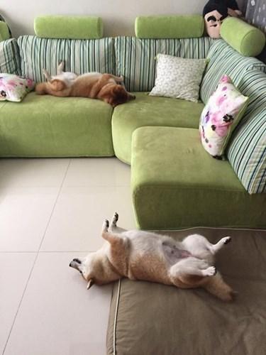 """""""Đến cả tư thế ngủ cũng còn bị nó bắt chước!"""" - hình ảnh hài hước nhất của loài động vật."""