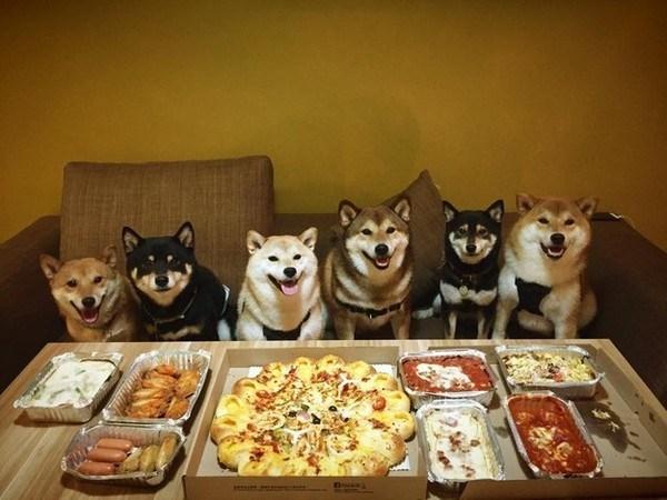 """Hình ảnh những chú cún con dễ thương nhất hành tinh này chụp gia đình của giống chó Shiba Inu.""""Cùng đi ăn với nhau là một truyền thống của gia đình nhà Shiba Inu chúng tôi!"""""""