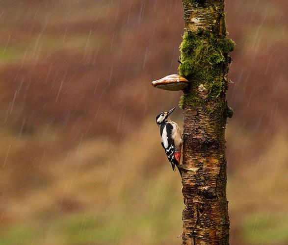 Chú chim hòa mình trong thiên nhiên hoang dã với chiếc ô đáng yêu.
