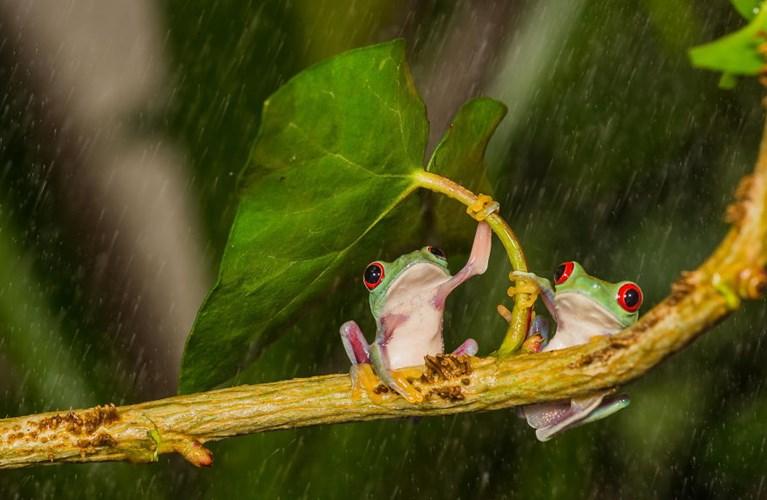 Ngộ nghĩnh bộ ảnh động vật trú mưa ô tự nhiên