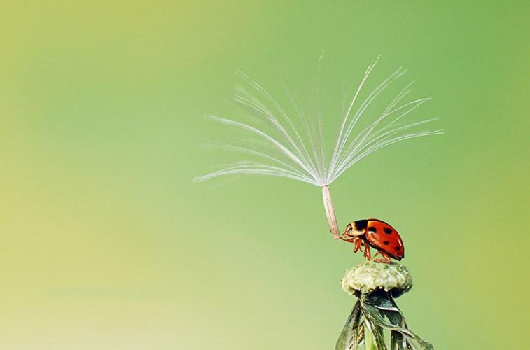 Chiếc ô của chú bọ rùa đụng hàng với của ốc sên.