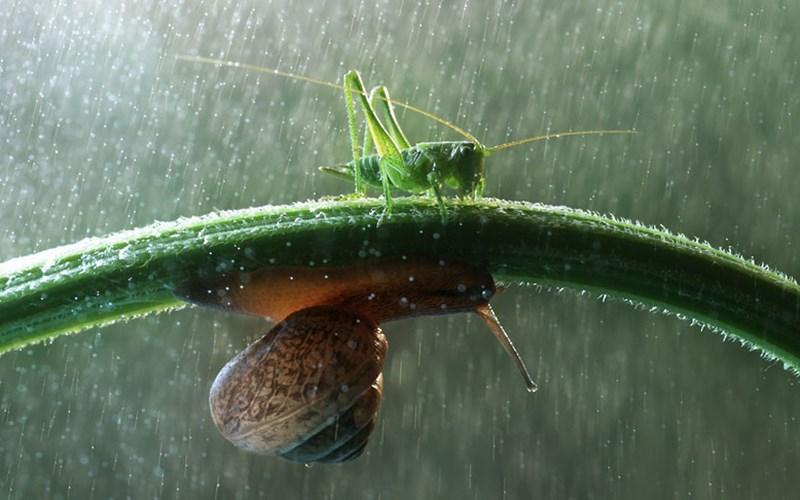 """Khả năng """"leo tường"""" vượt trội của ốc sên khiến những cơn mưa không còn là vấn đề đáng ghét."""