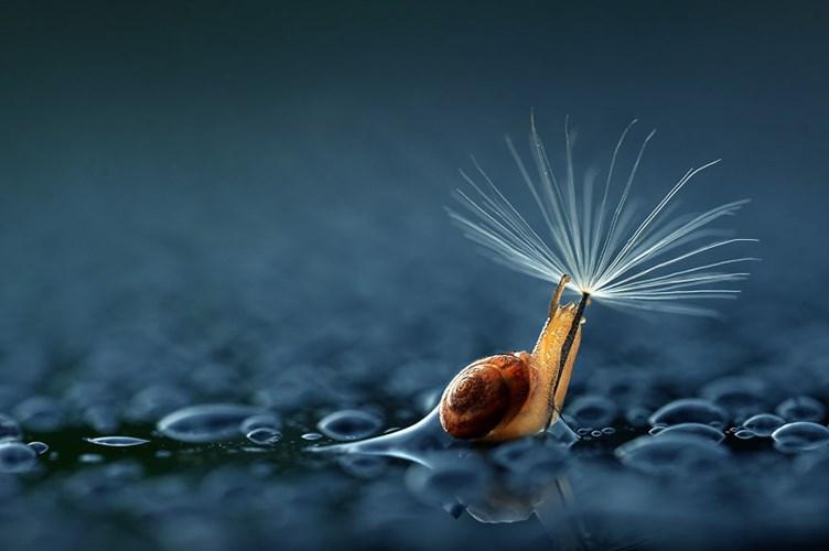 Bộ ảnh động vật trú mưa từ những chiếc ô tự nhiên trông vô cùng đáng yêu. Động vật hoang dã luôn có cách của riêng mình để đối phó với mưa, đôi khi, chúng tìm thấy một chiếc lá, hoa hay nấm và đứng trú vào đó. Con vật sử dụng cỏ cây hoa lá làm thành chiếc dù dễ thương cho mình.