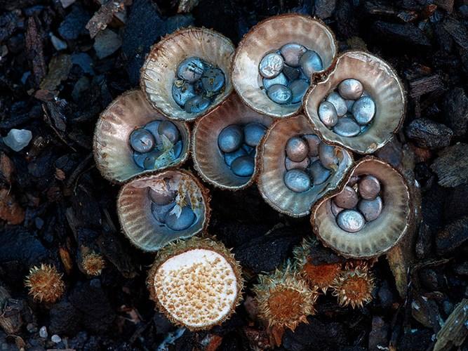 Theo ước tính của Steve Axford, thế giới có khoảng bốn triệu loài nấm khác nhau nhưng chỉ có 100.000-200.000 loài được ghi nhận và miêu tả.