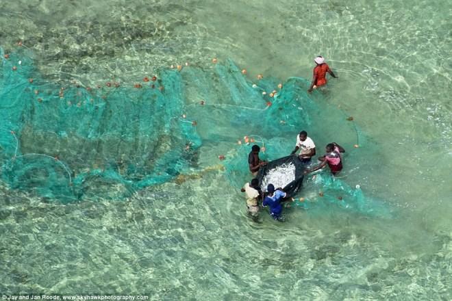 Những ngư dân đang kéo lưới và thu thành quả của mình.