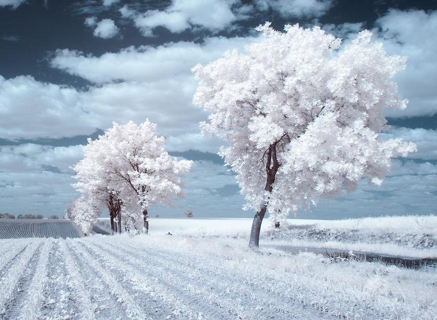 Ngẩn ngơ cánh đồng tuyết trắng đẹp mê hồn tại Ba Lan