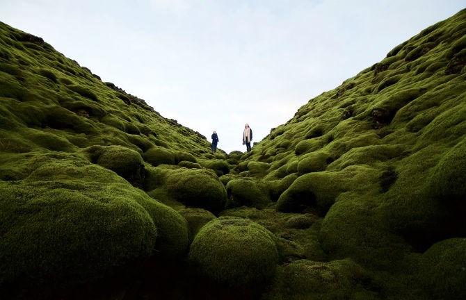 Lớp rêu xanh dày bao phủ những dòng dung nham qua hàng thế kỷ ở Iceland.