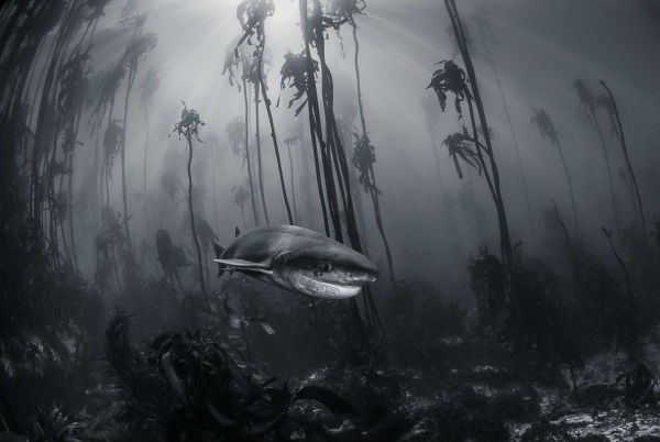 Thế giới đại dương ở thị trấn Simon, Western Cape, Nam Phi.