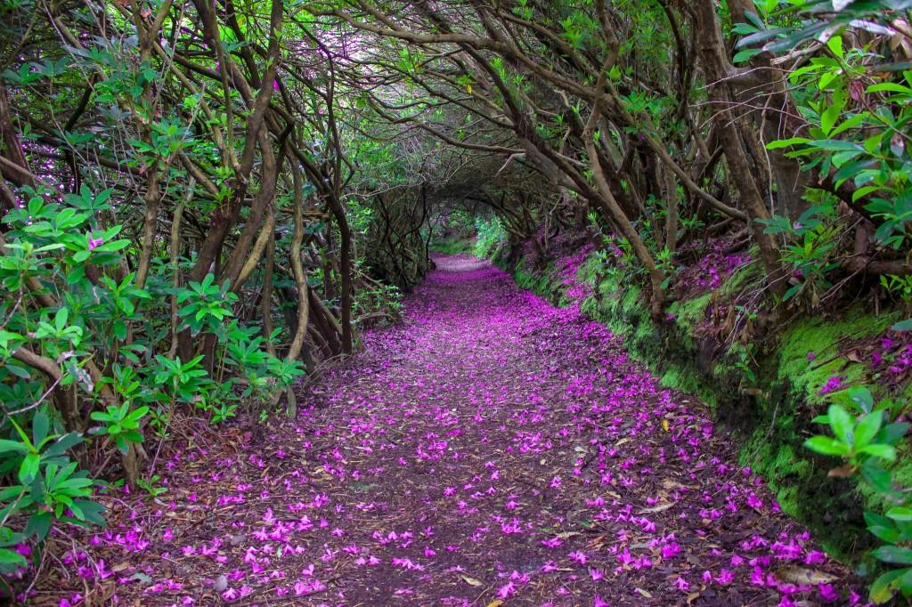 Hình ảnh những con đường tuyệt đẹp