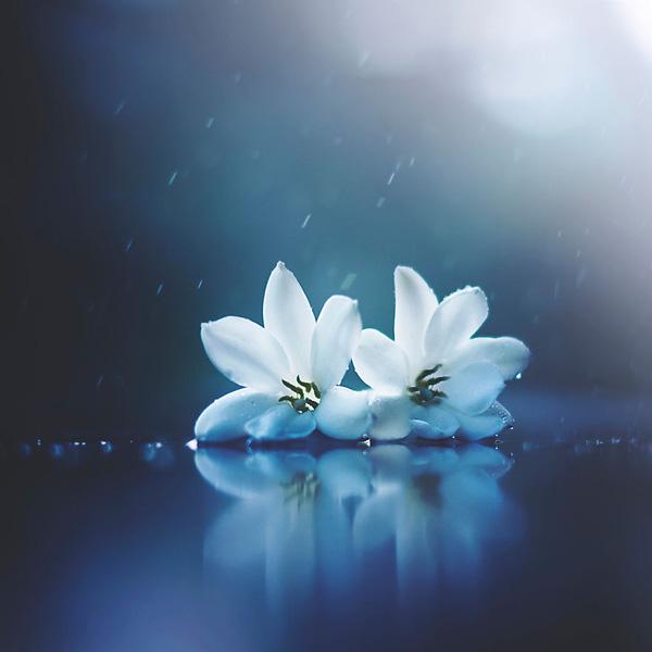 bo-anh-vu-dieu-loai-hoa-tuyet-dep-danh-cho-nguoi-yeu-thien-nhien_photoZone-com-vn 13