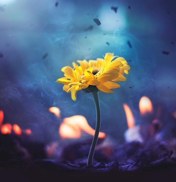 Bộ ảnh vũ điệu loài hoa tuyệt đẹp dành cho người yêu thiên nhiên