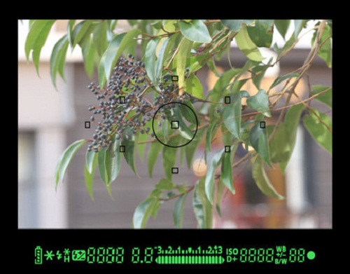 viewfinder-tren-may-anh-so_photozone-com-vn-5