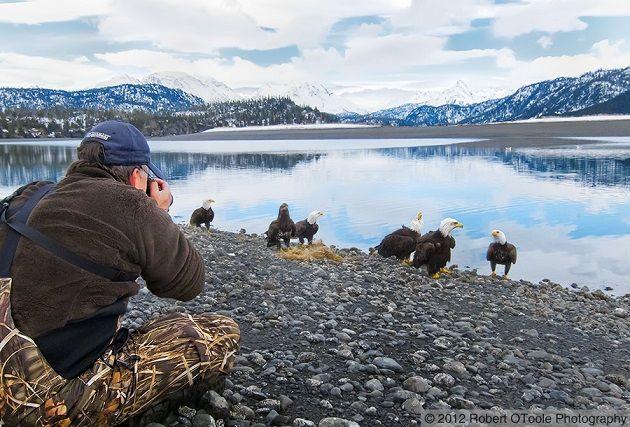 Có nên dàn dựng khi chụp ảnh các loài động vật?