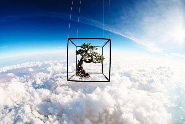 Bộ ảnh về hành trình 10 năm vòng quanh thế giới của một cái cây
