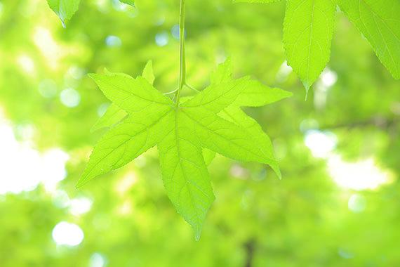 toi-phai-lam-gi-neu-anh-sang-ko-nhu-mong-doi_photoZone-com-vn- 2