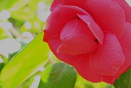 toi-phai-lam-gi-neu-anh-sang-ko-nhu-mong-doi_photoZone-com-vn- 9