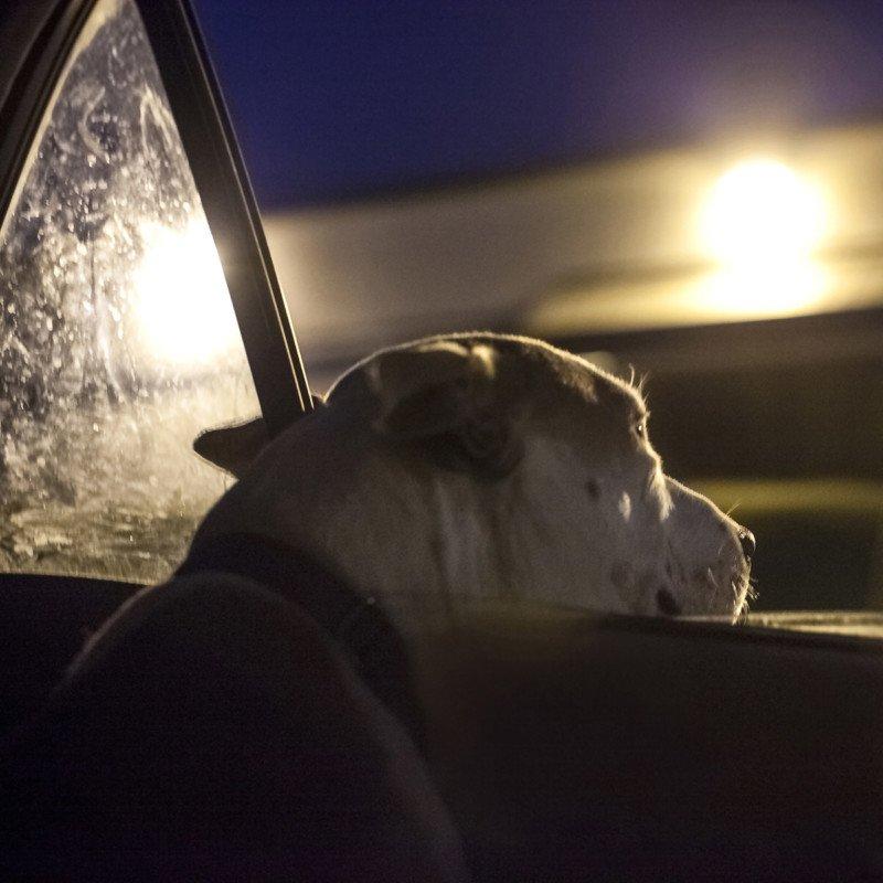 Bộ ảnh chân thực và sống động về những chú chó bị bỏ rơi