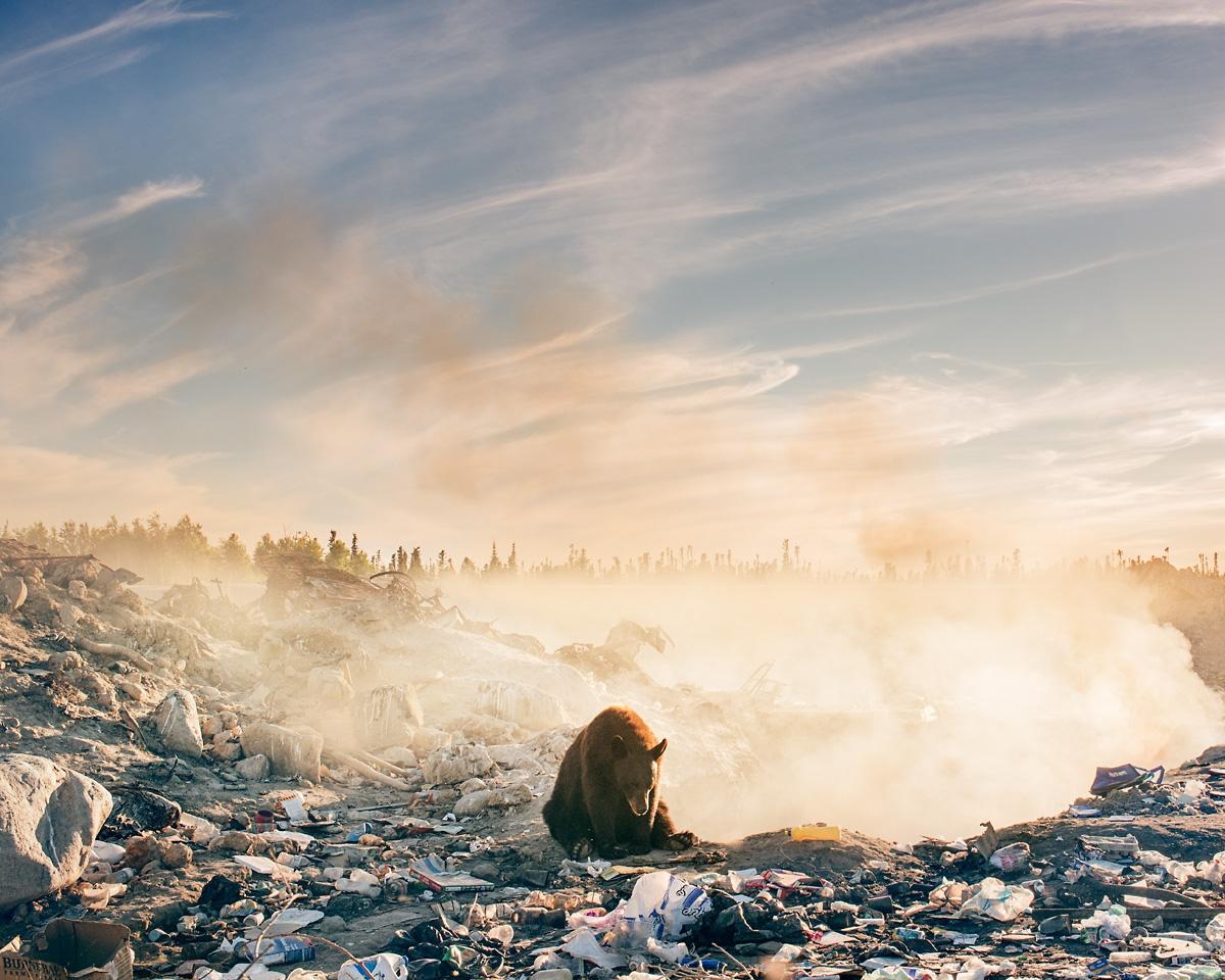 Hình ảnh con gấu trong vụ đổ rác đã mang lại cho nhiếp ảnh gia nước mắt