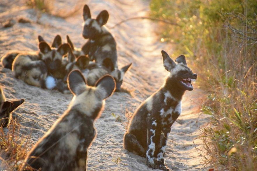 19 con vật tội nghiệp bị chụp ảnh dìm hàng đúng lúc