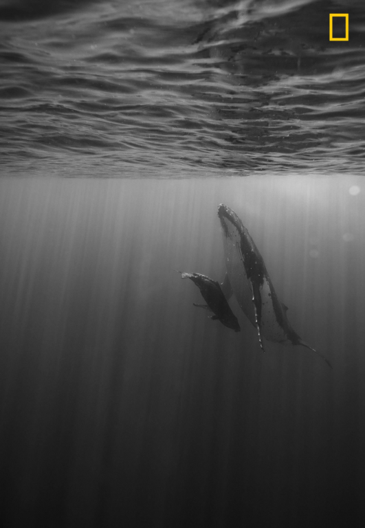 Thiên nhiên đầy ấn tượng trên loạt ảnh dự thi của National Geographic