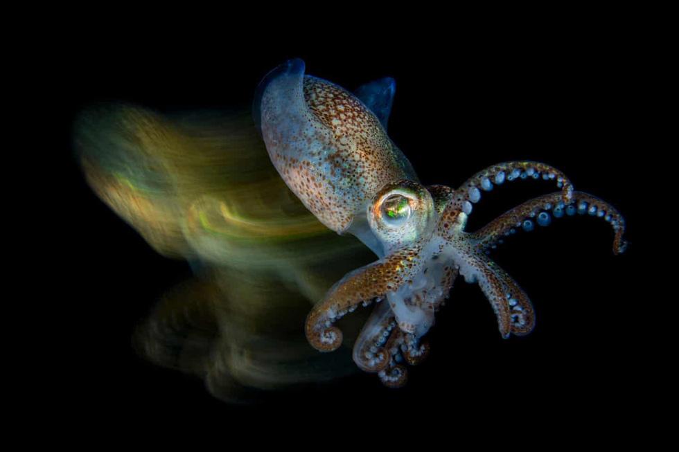 Mê mẩn những bức ảnh đẹp nhất của đại dương năm 2019