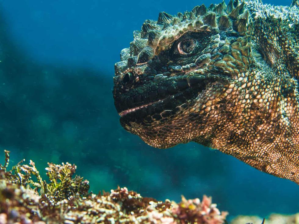 Mê mẩn ảnh đẹp đại dương năm 2019 Mê mẩn những bức ảnh đẹp nhất của đại dương năm 2019