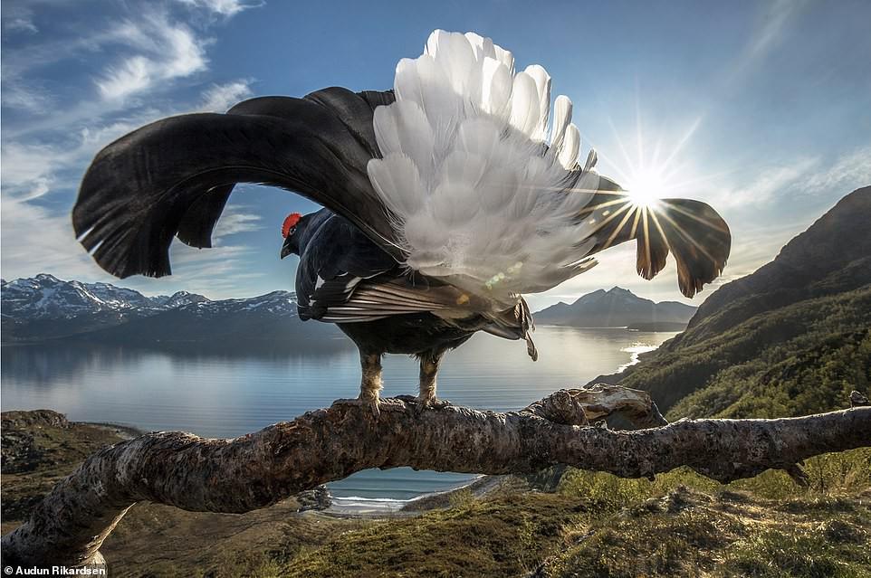 Ảnh thiên nhiên tuyệt đẹp